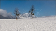 Bäume_Grimming_Winter_Kulm_DSC_2401