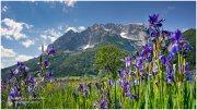 Blume 20_R2A1526-1_05_23