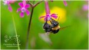 Blume mit Biene 20_R2B2403_05_23-1